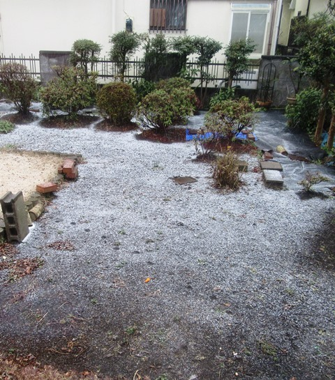 雪が積もってきた