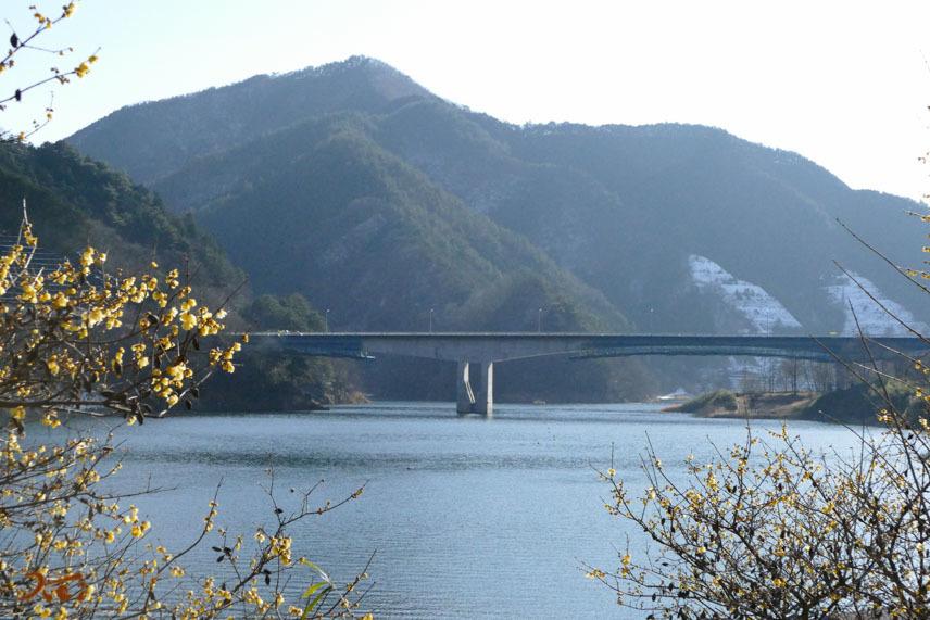 梅田湖ロウバイパーク02