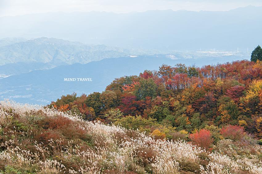 葛城山 紅葉と薄
