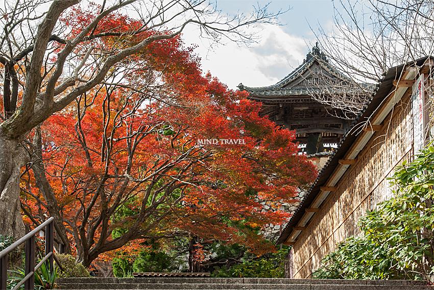 勝尾寺 鐘楼 紅葉