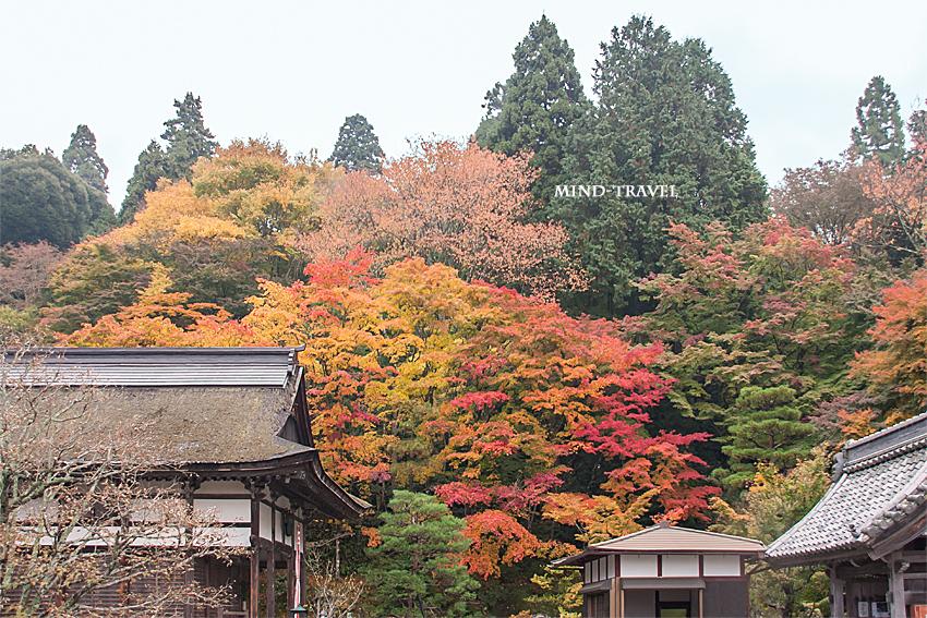 百済寺 紅葉