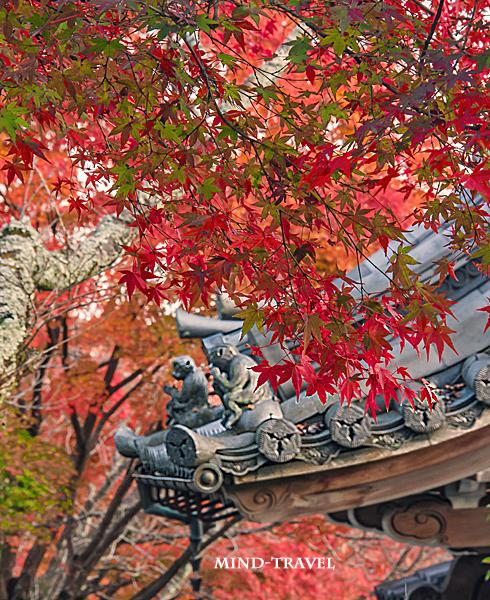 西教寺 猿の像 紅葉