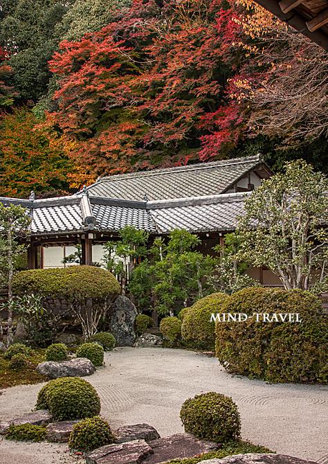 西教寺 庭園 紅葉