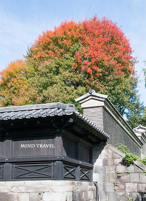 湯島聖堂 紅葉