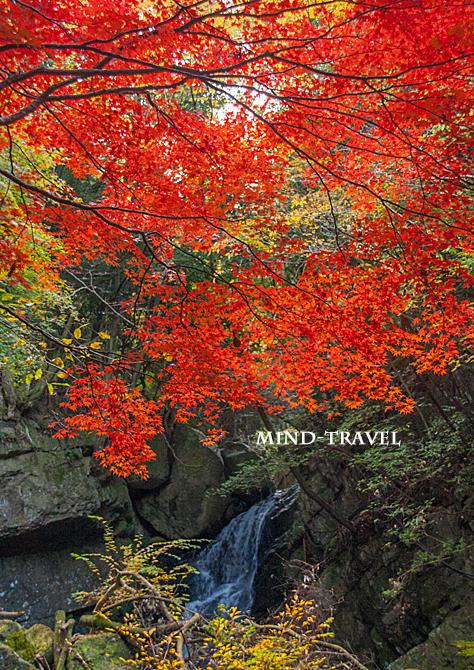 大威徳寺 錦秋の滝 紅葉