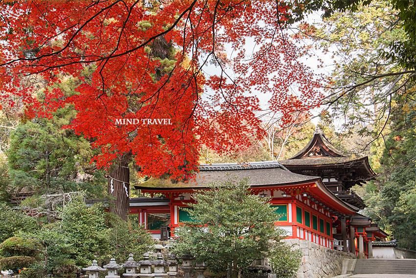 石上神社 紅葉