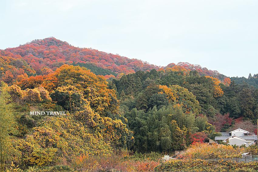 山の辺の道 紅葉