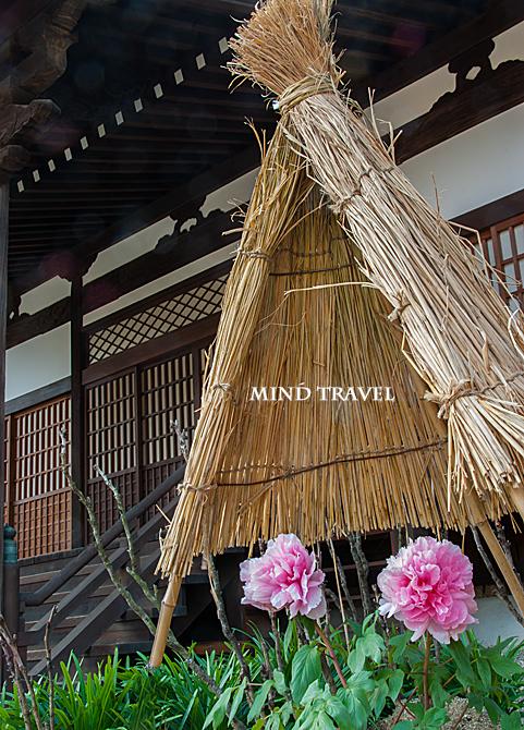 當麻寺 冬牡丹2