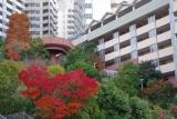 ベルデ名谷・ハート型の紅葉