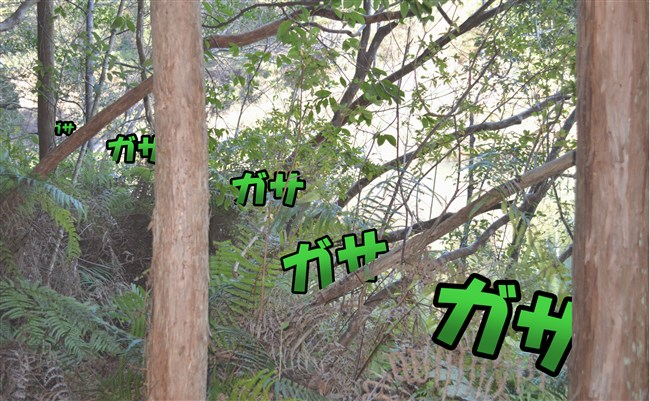 DSC1111_0004.jpg