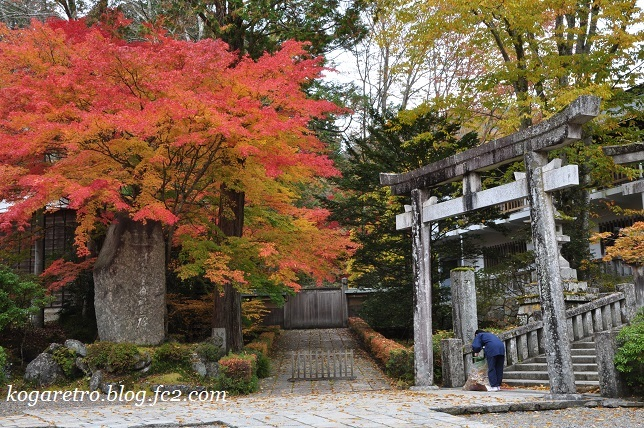 2016古峯神社の紅葉3
