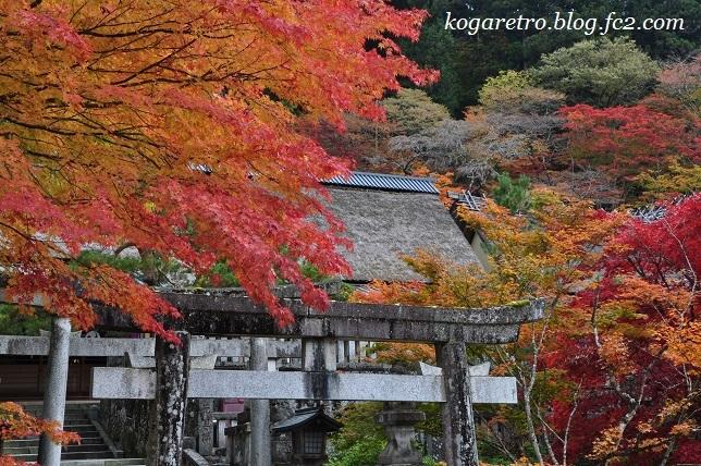 2016古峯神社の紅葉4
