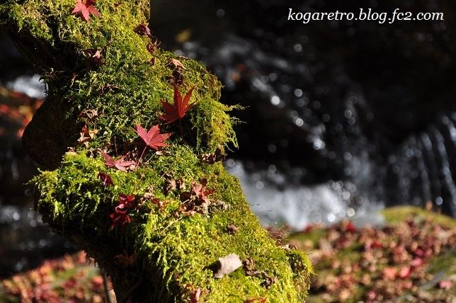 2016蓬莱山の紅葉4
