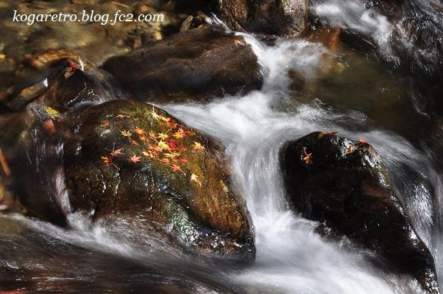 2016蓬莱山の紅葉5