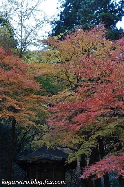 2016蓬莱山の紅葉