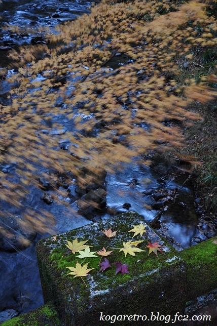 2016蓬莱山の紅葉7