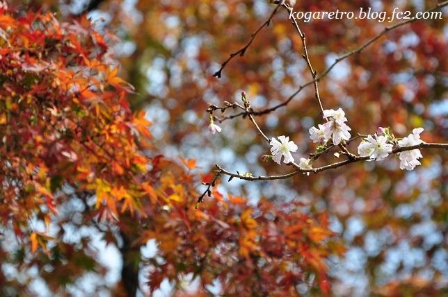 満福寺の紅葉3