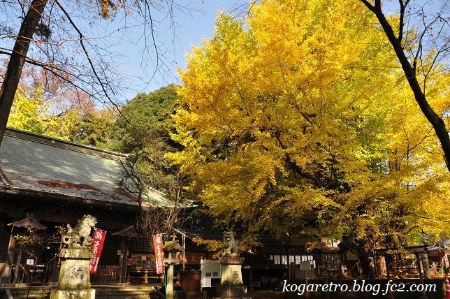 野木神社の大イチョウ