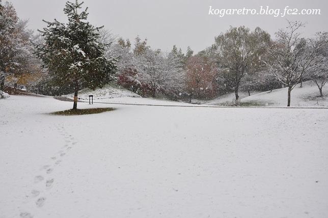 雪の古河総合公園2