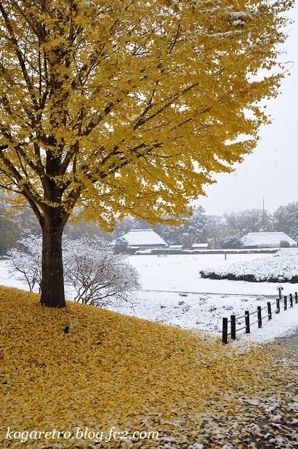 雪の古河総合公園
