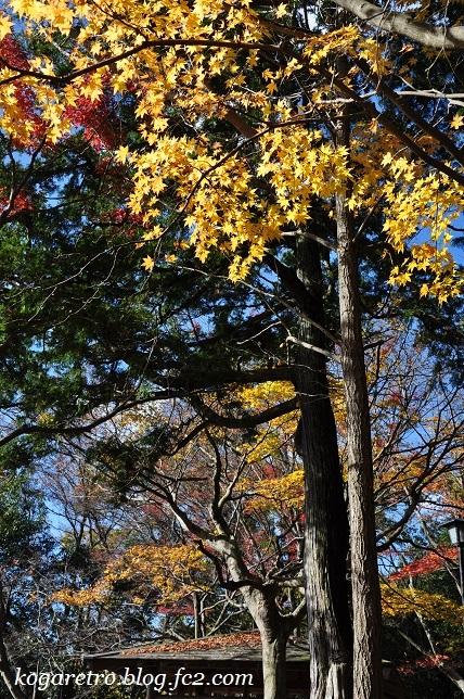 2016太平山の紅葉6