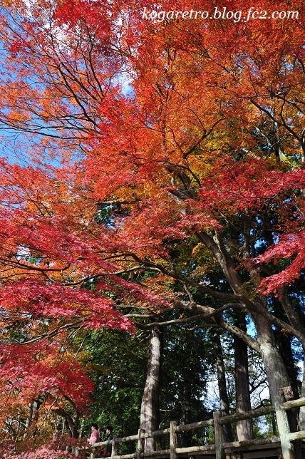 2016太平山の紅葉4