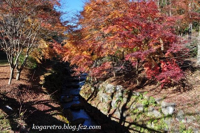 出流山の紅葉と冬桜