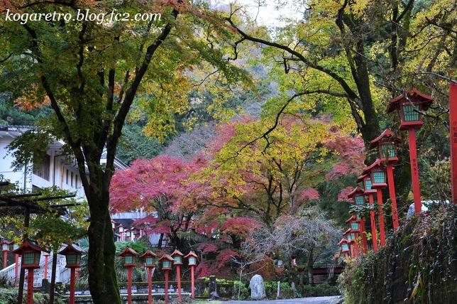 出流山の紅葉と冬桜5