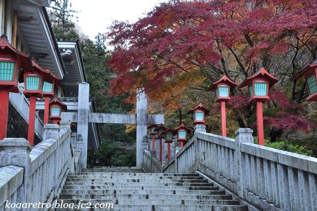 出流山の紅葉と冬桜6