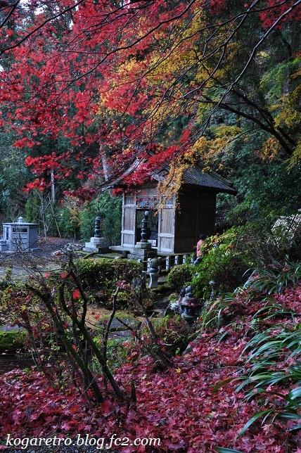 出流山の紅葉と冬桜7