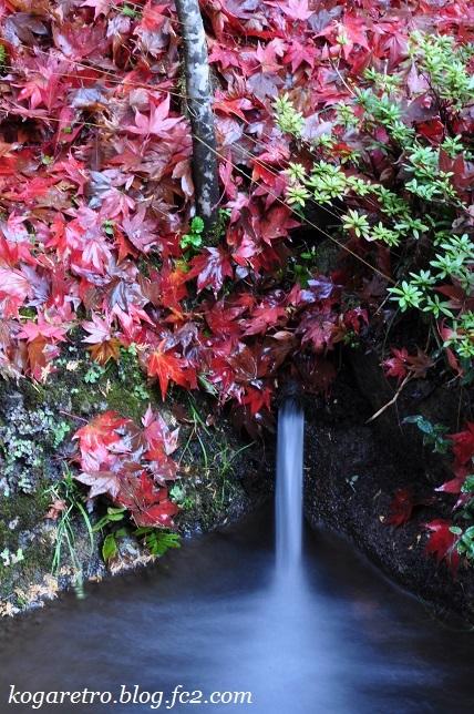 出流山の紅葉と冬桜8