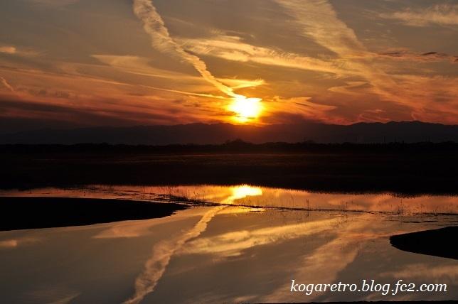 渡良瀬遊水地の夕日(11)