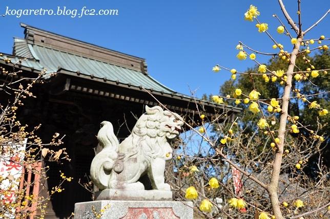板倉雷電神社で蝋梅2