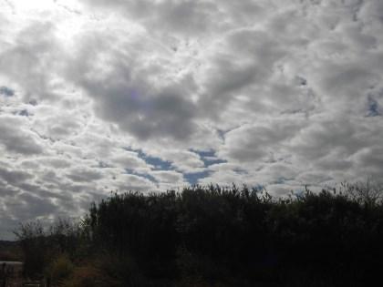 この雲の反射でウキが見えず苦戦