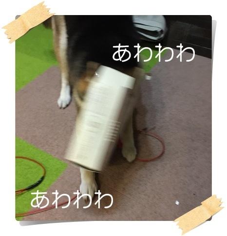 komaro20170211_2.jpg