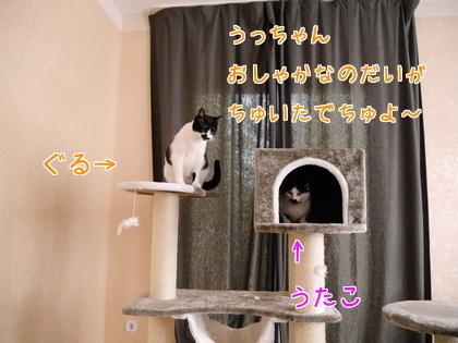 11月 キャットタワーの続き~♪1