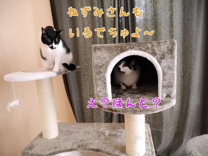 11月 キャットタワーの続き~♪2