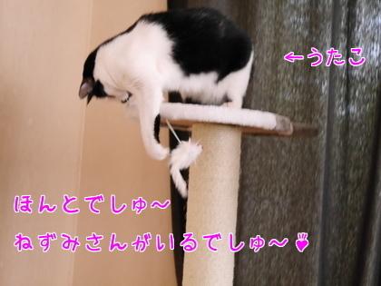 11月 キャットタワーの続き~♪3