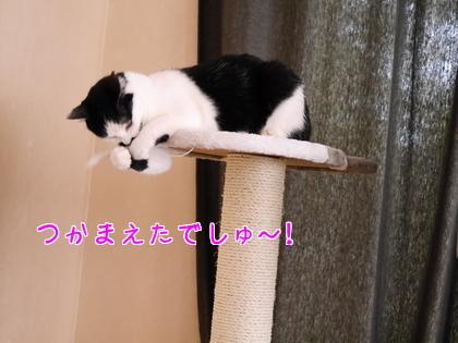 11月 キャットタワーの続き~♪4