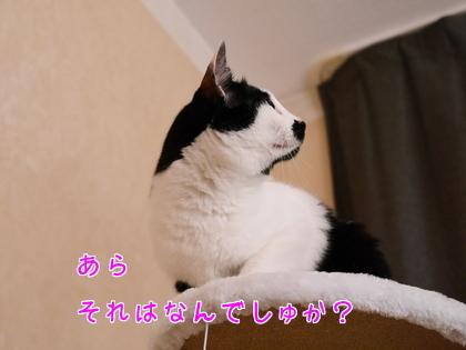 11月 キャットタワーの続き~♪10