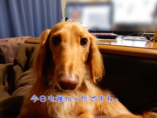 DSCN2308.jpg