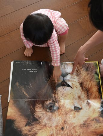lion_1612.jpg