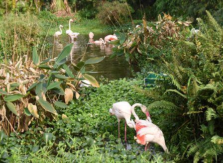 taipeizoo_flamingo_1601.jpg