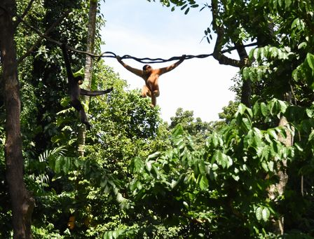 zoo_monkey.jpg