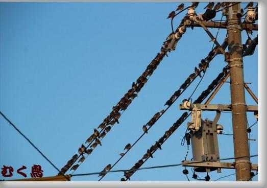 IMG_0969 むく鳥の_R