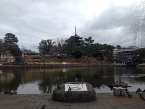 sarusawa0131_convert_20170131111053.jpg