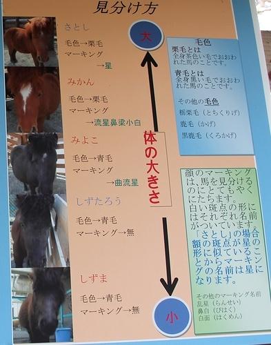 円山動物園_25