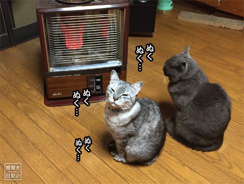 20170121_湯たんぽ2