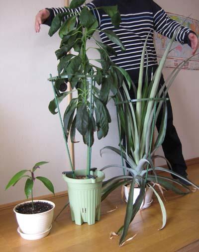 植物の現在