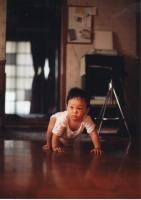 柴犬泰陽052